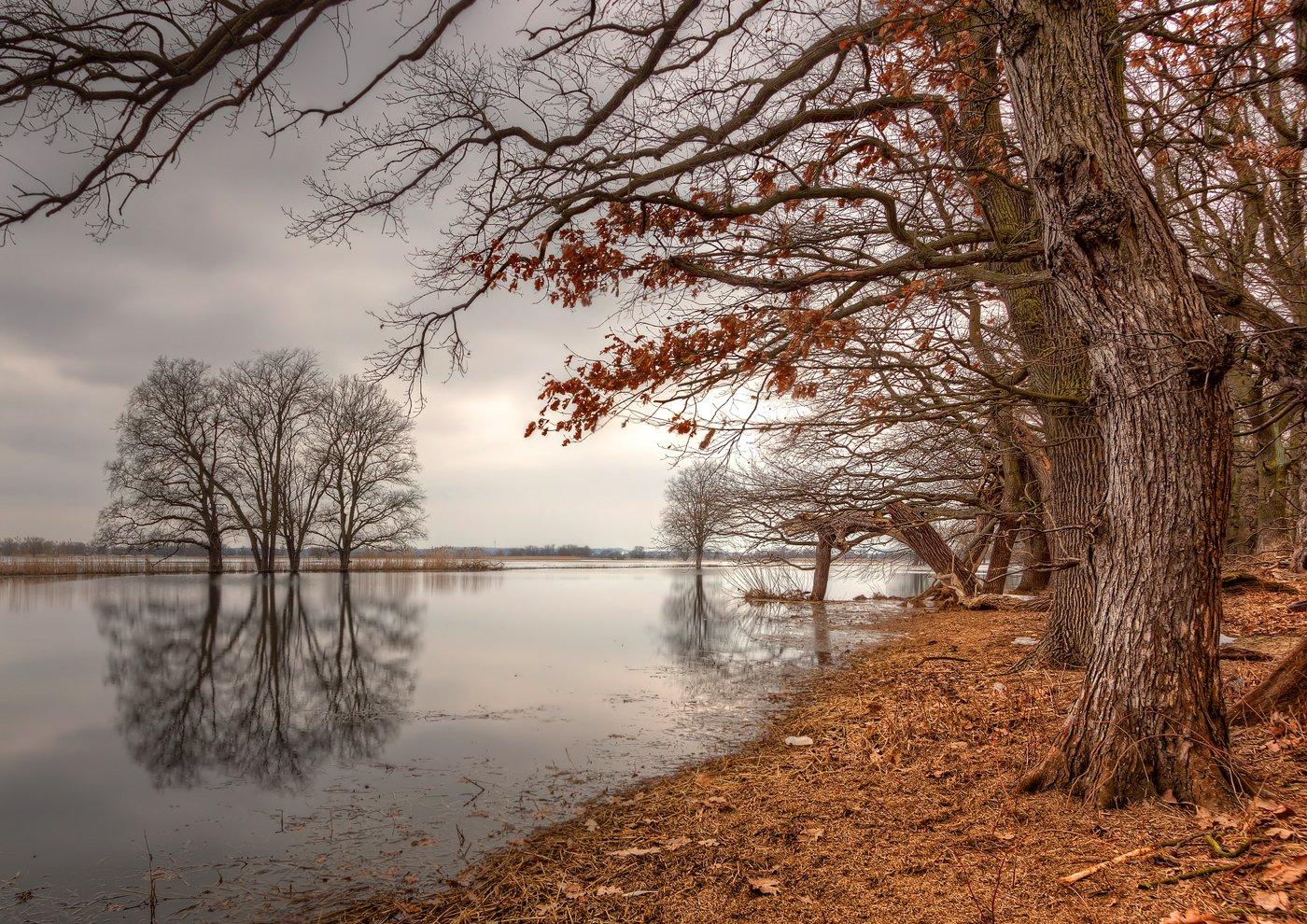 Herbst am Ufer der Oder bei Schwedt