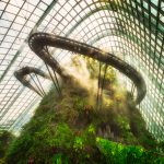 Cloud Forest | Marina Bay, Singapore