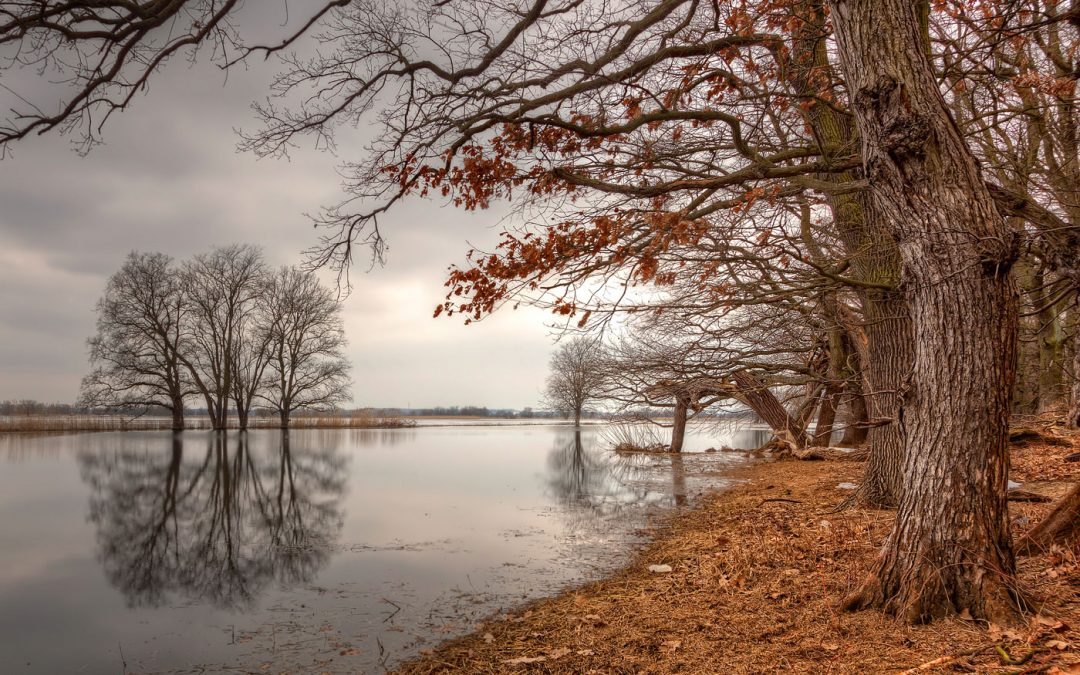 The new Autumn | Oder River, Germany