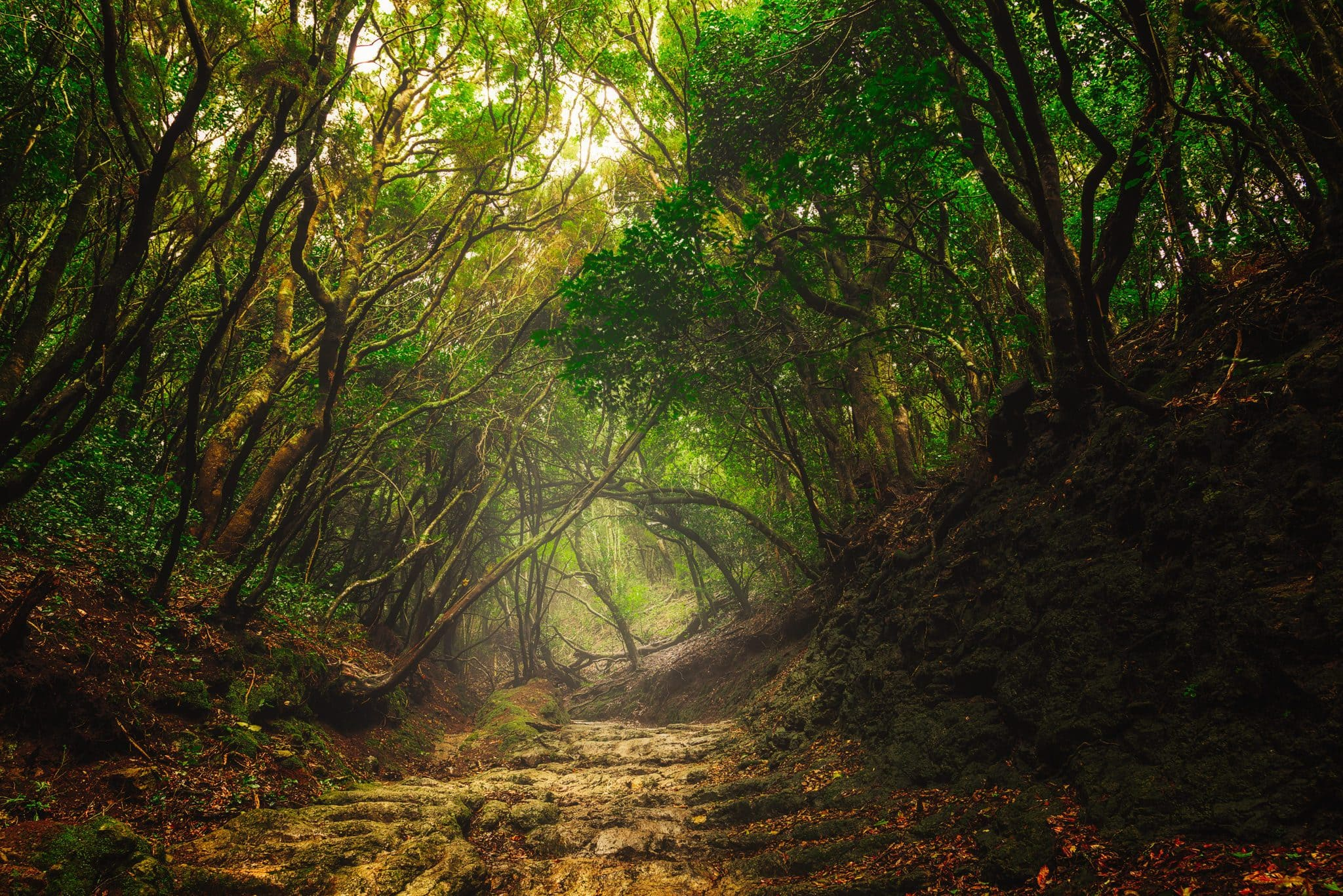 Genießen Sie die atemberaubende Schönheit des Wolkenwaldes im Anaga Gebirge, das sich auf Teneriffa in Spanien befindet.