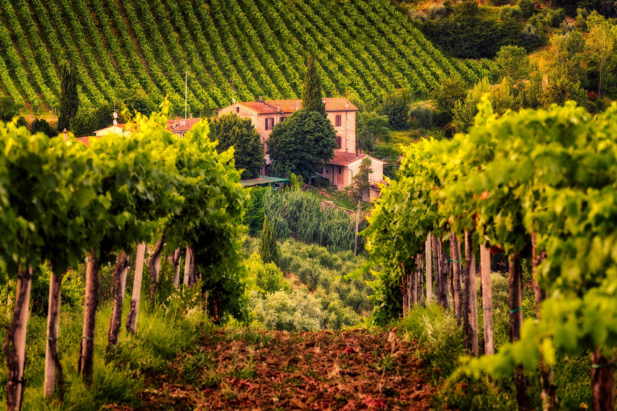 Tuscany's vineyards by a villa, Italy.