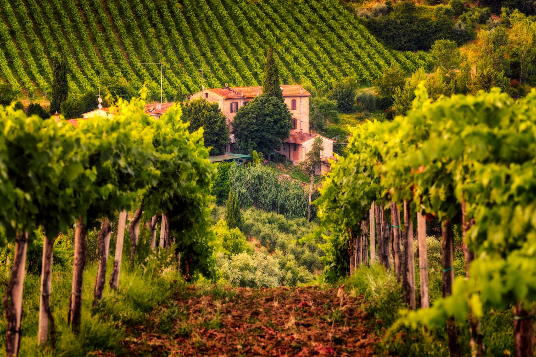 Tuscany's vineyards by a villa, Italy.