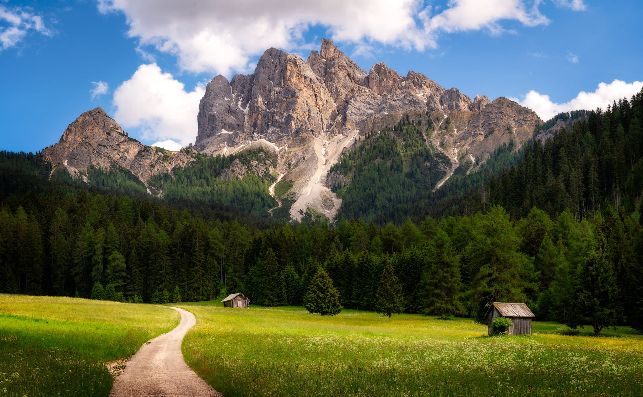 A meadow in front of Picco di Vallandro in the Dolomites in South Tirol, Italy