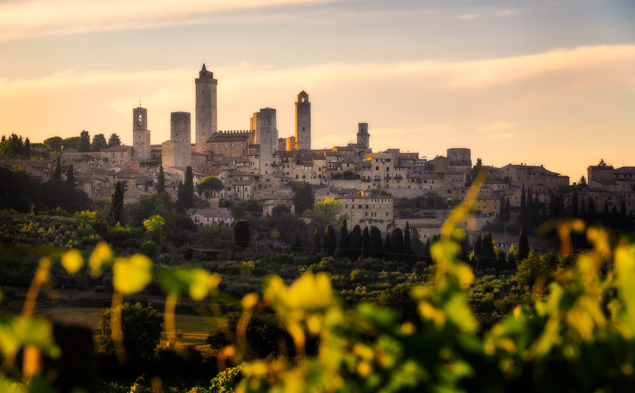 San Gimignano and the San Gimignano vineyards, Italy.