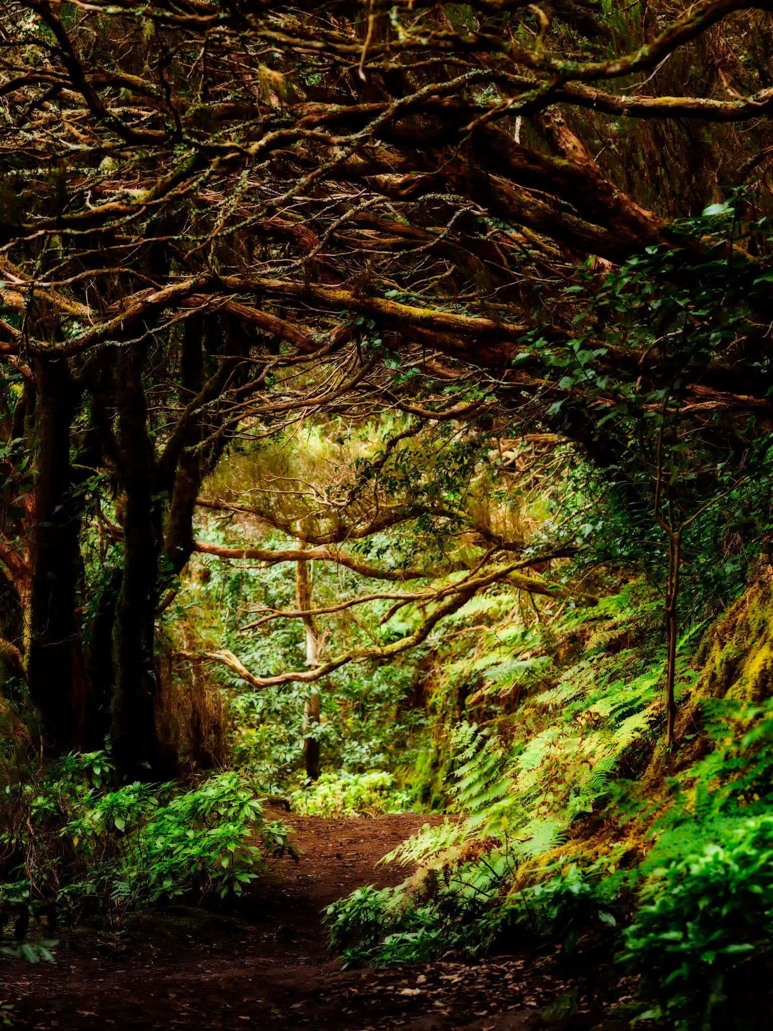 Path through Laurel Forest on Anaga Mountains in Tenerife, Spain