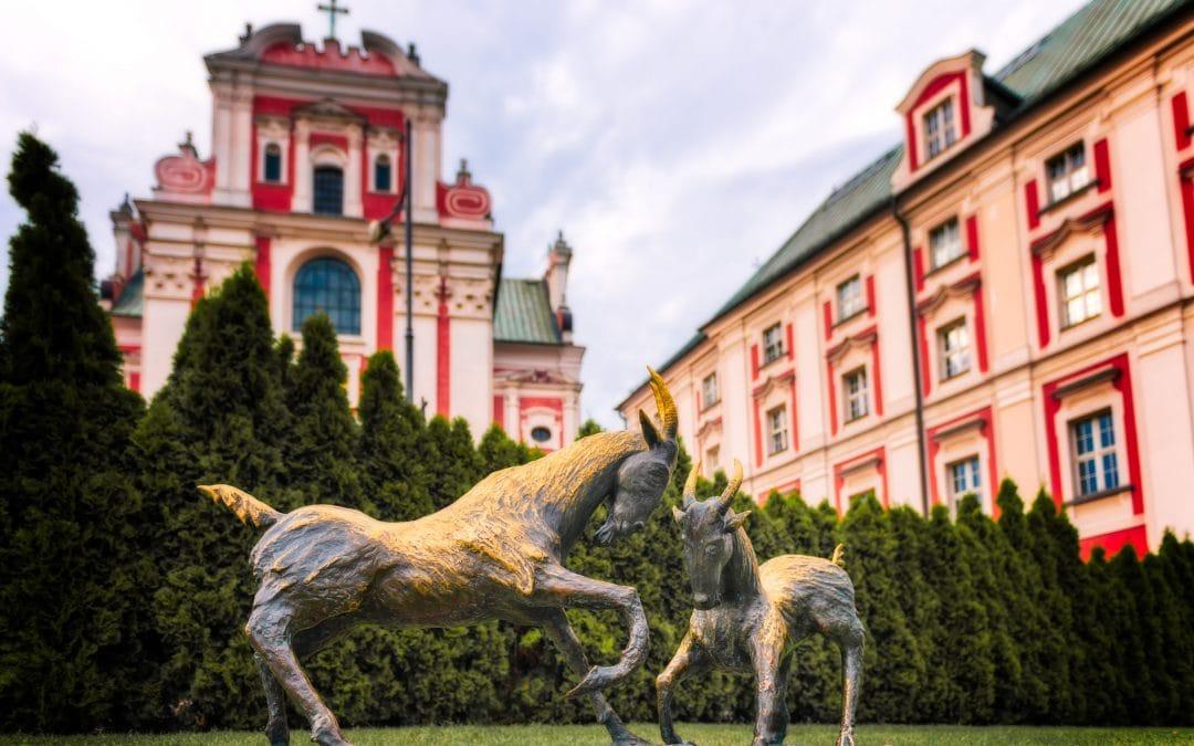 Cabras de Poznan | Poznan, Polónia